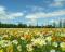 Aromas florais